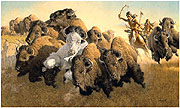 In Pursuit of the White Buffalo
